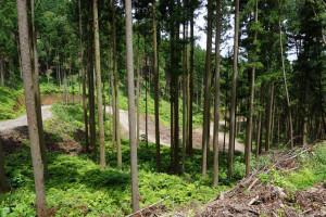 林道の整備実績