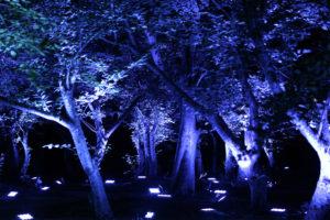 宇部市ときわ公園チームラボ「呼応する森」